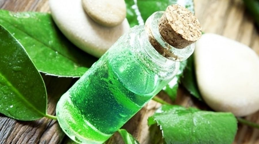 tea tree oil for dandruff treatment