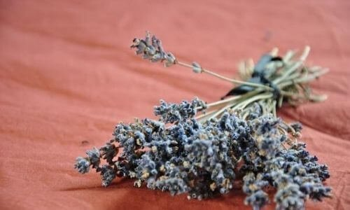 How to make lavender oil for hair