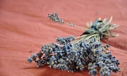 How to make lavender oil for hair